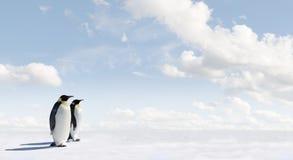 Pinguins de imperador em Continente antárctico Foto de Stock