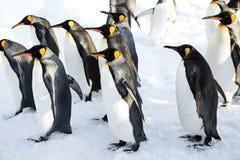 Pinguins de rei foto de stock
