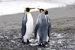 Pinguins de rei foto de stock royalty free