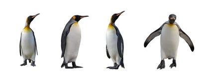 Pinguins de rei isolados fotos de stock