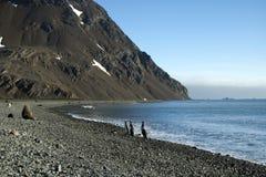 Pinguins de rei que andam da água na parte remota da praia imagem de stock