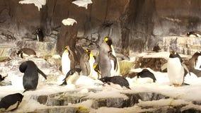 Pinguins dentro do mundo de Disney fotografia de stock royalty free
