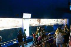 Pinguins dos relógios dos turistas no aquário - Barcelona, Espanha foto de stock