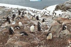 Pinguins e animais selvagens da Antártica fotos de stock royalty free