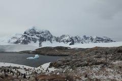 Pinguins e animais selvagens da Antártica foto de stock royalty free