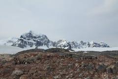 Pinguins e animais selvagens da Antártica imagens de stock
