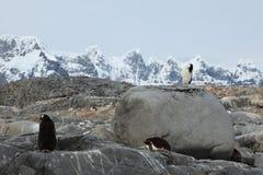 Pinguins e animais selvagens da Antártica fotografia de stock royalty free