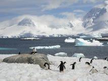Pinguins em Continente antárctico Imagens de Stock