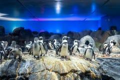 Pinguins em Langkawi Waterworld imagens de stock
