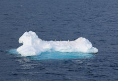 Pinguins em um floe de gelo fotografia de stock