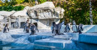 Pinguins em um jardim zoológico imagem de stock