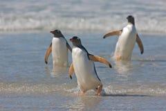 Pinguins em uma praia Fotografia de Stock