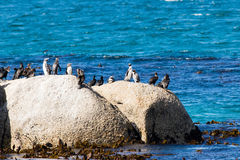 Pinguins em uma rocha foto de stock royalty free