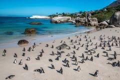 Pinguins en Cape Town Suráfrica Fotografía de archivo