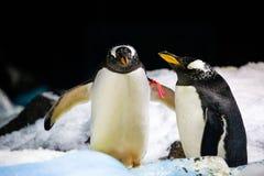 Pinguins fechados no jardim zoológico foto de stock royalty free