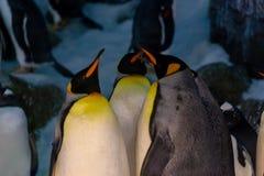 Pinguins fechados no jardim zoológico fotografia de stock