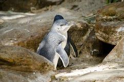 Pinguins feericamente foto de stock royalty free