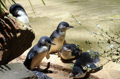 Pinguins feericamente imagem de stock royalty free
