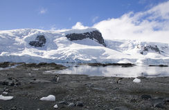 Pinguins na Antártica Foto de Stock Royalty Free