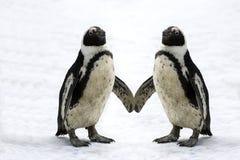 Pinguins na neve fotografia de stock royalty free