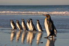 Pinguins na praia Fotos de Stock Royalty Free