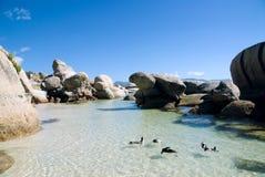 Pinguins na praia de Boulder imagem de stock