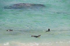 Pinguins na praia dos pedregulhos, África do Sul imagens de stock
