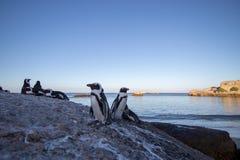 Pinguins na rocha fotografia de stock royalty free