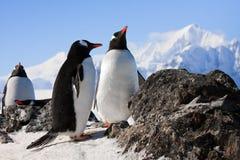 Pinguins na rocha fotos de stock