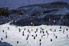 Pinguins no Continente antárctico imagens de stock royalty free