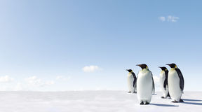 Pinguins no gelo Fotografia de Stock Royalty Free
