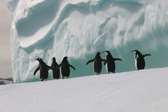 Pinguins no iceberg