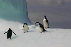 Pinguins no iceberg fotografia de stock royalty free