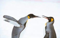 Pinguins no jardim zoológico de Asahiyama Foto de Stock