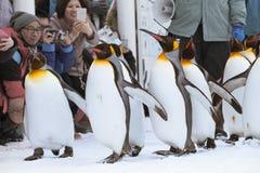 Pinguins no jardim zoológico de Asahiyama Fotos de Stock Royalty Free