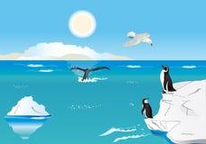 Pinguins no pólo sul 1 Imagens de Stock Royalty Free