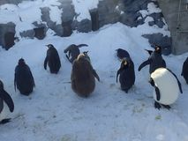 Pinguins no parque Fotos de Stock Royalty Free
