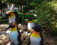 Pinguins nos trópicos fotos de stock royalty free