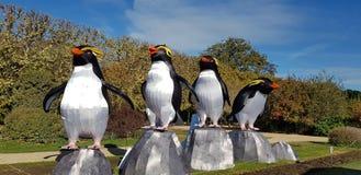 Pinguins på & x22; Jardin des Plantes & x22; av Paris fotografering för bildbyråer