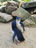 Pinguins pequenos fotos de stock royalty free