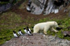 Pinguins pequenos e urso polar fotografia de stock royalty free