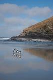 Pinguins que andam ao longo de uma praia Foto de Stock Royalty Free