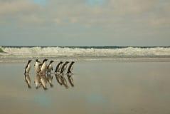 Pinguins que andam em uma praia Fotos de Stock Royalty Free