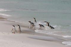 Pinguins que andam em uma praia do oceano Fotos de Stock