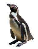 Pinguinsitzen stockfotografie