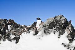 Pinguinstillstehen Lizenzfreies Stockfoto