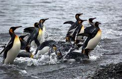 Pinguïnen Royalty-vrije Stock Afbeeldingen