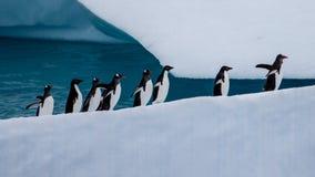 Pinguïnen die bergop marcheren Stock Foto