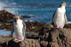pingvin 03 Royaltyfri Foto