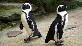 pingvin Royaltyfri Fotografi
